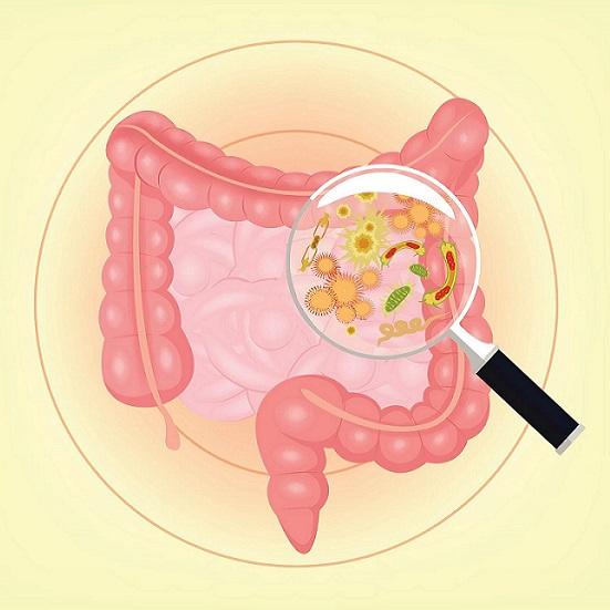 Influência da microbiota saudável na redução do risco de câncer