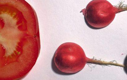 Alimentação e infertilidade masculina