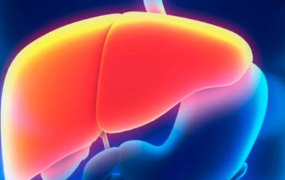 Microbiota intestinal e esteatose hepática